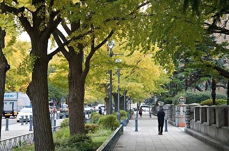 晩秋の横浜201208