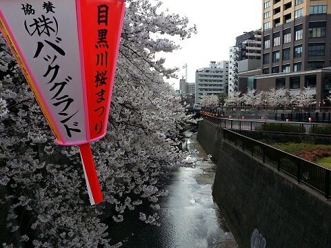 目黒川2013020