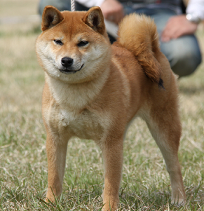 20130505024514c84.png