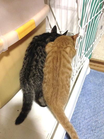 cat_etc174.jpg