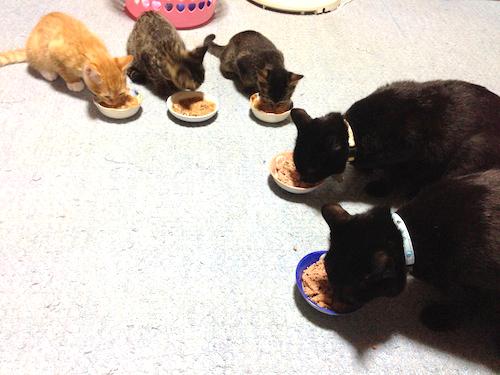 cat_etc180.jpg