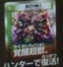 dmx04_japanika.jpg