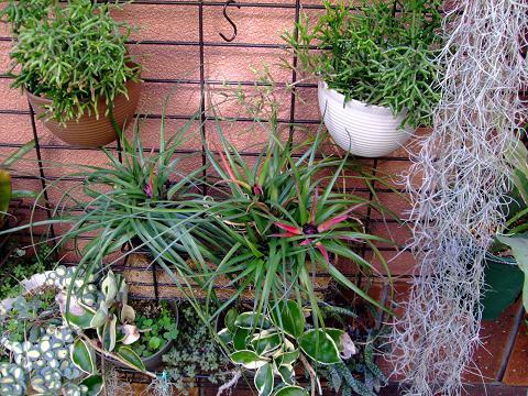 チランジア、葦サボテン、ホヤなどにもいい環境?みたいですw