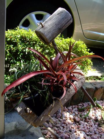 木馬に乗ってウイリ~ったー!クリプトベルギア レッド バースト~ Cryptbergia Red Burst(Crypthanthus bahianus × Billbergia nutans)