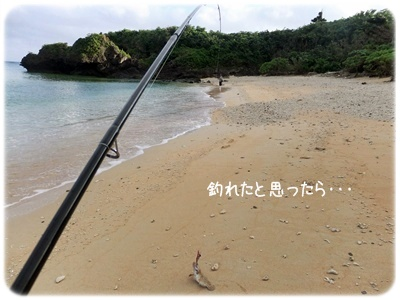 2013_01140006.jpg