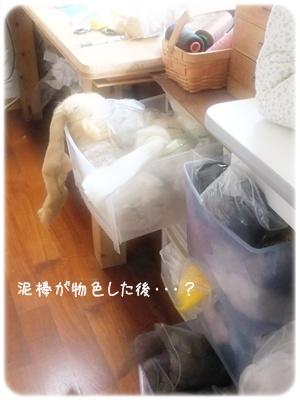 2013_03150002.jpg