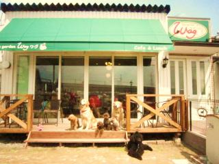 dog garden wag