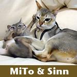 xxx Sinn&MiTo xxx